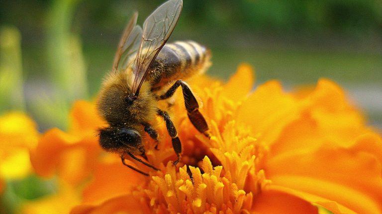Piosenka o pszczółkach