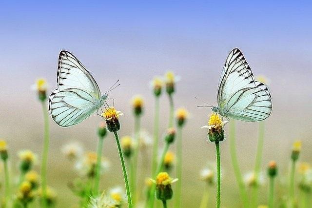Wiosennie o kwiatach i owadach