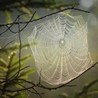 Przywitanie jesieni z małym pajączkiem